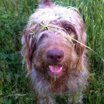 Take12trips: Alfie loves playing in the long grass!