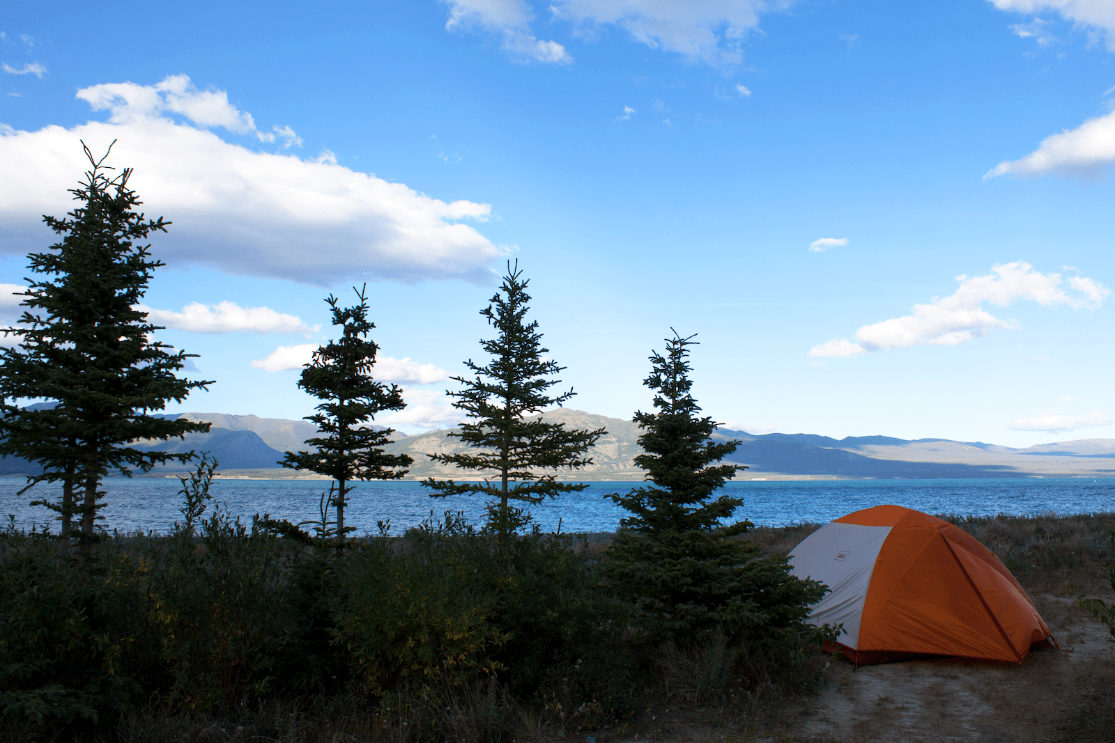 Camping amongst trees in front of Kluane Lake, Yukon, Canada