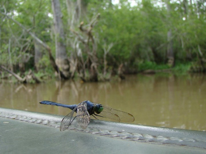 A dragonfly takes a rest on the boat.