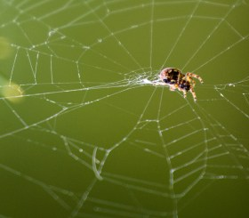 The Weaving Spider