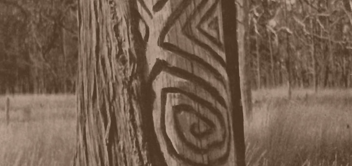 Aboriginal Scar Tree (Dendroglyph)