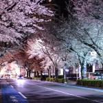 東村山の夜桜と久米川の桜