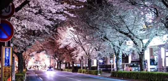 東村山市の夜桜