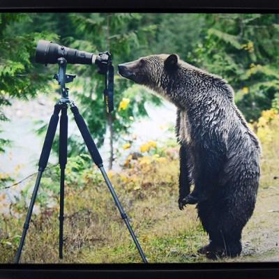 Jim Lawrence's Photo Bear