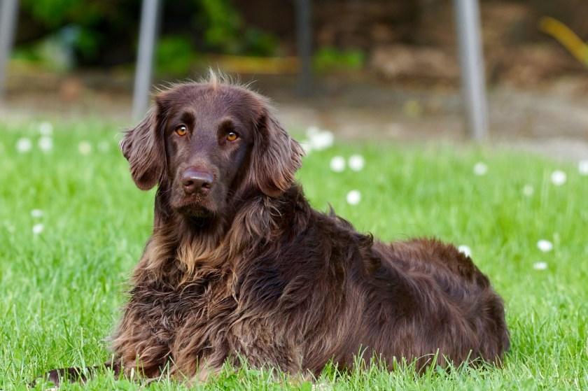 Valp eller vuxen hund? Ibland passar en vuxen hund bättre in i familjen än en valp.