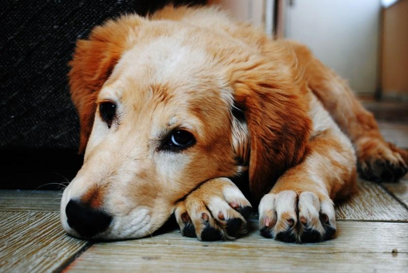 Är du redo att skaffa hund? Det är viktigt att ni har tid att ta hand om hunden.