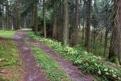 Leicht kuppiertes Gelände im Wald