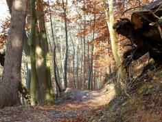 Wildromantischer Karrenweg in der Pössinger Au