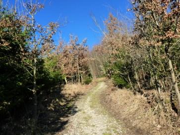 Weiter durch jungen Laubwald