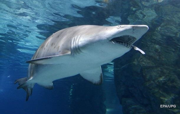 In the US, a man died after a shark attack