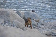 Pozne obiskovalce preseneti tudi kakšna divja žival :)