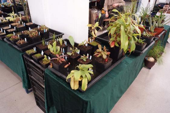 Terrarium-Pflanzen