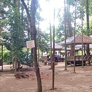 Wisata Banjarbaru, Taman Hutan Pinus Alami dan Sejuk, Juga Bisa Untuk Resepsi Perkawinan