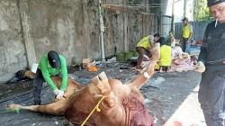 Proses penyembelihan sapi kurban di hari Raya Idul Adha 1442 di apartemen Kejati Kalsel. Selasa (20/7/2021/foto: leon)