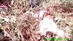 Penemuan mayat di semak-semak, wilayah Amuntai, Kabupaten HSU, Kalimantan Selatan. (foto: ramli)