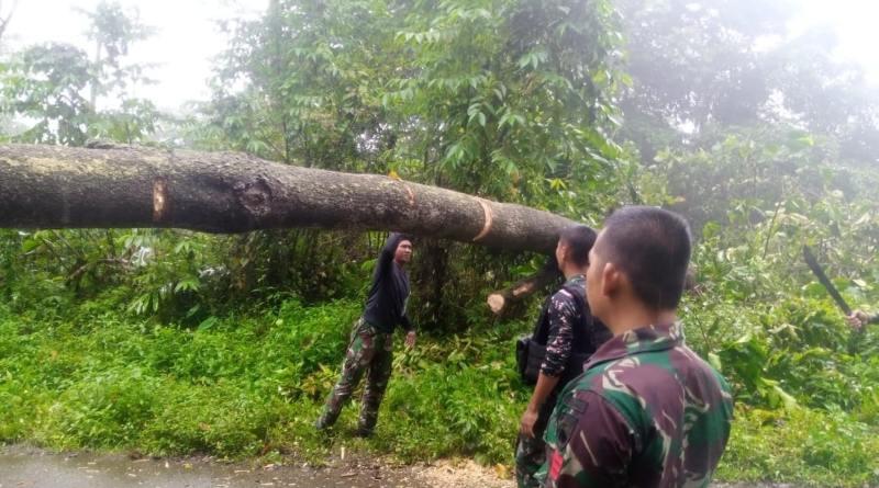 Kalan Satgas Yonif 403 Turun Tangan Bantu Evakuasi Sejumlah Pohon Tumbang