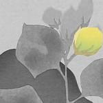 'Misceláneas primaverales', de Natsume Soseki