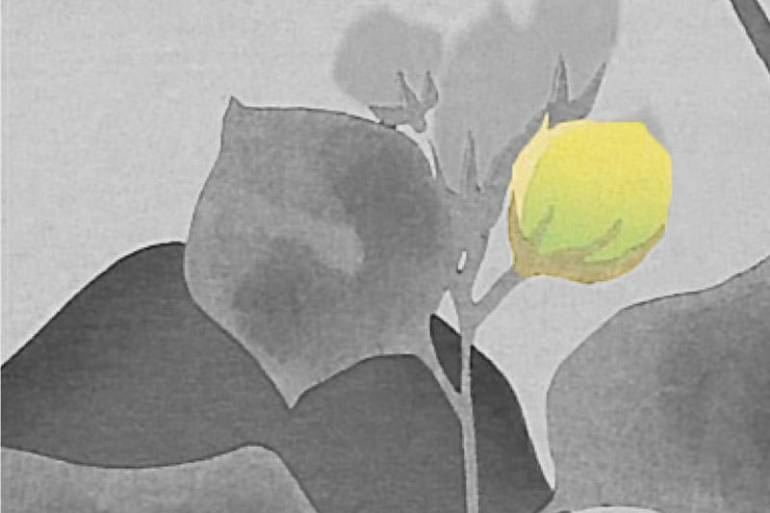 Miscelaneas primaverales-Natsume Soseki - Satori-800x600