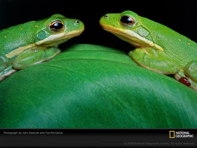 green-frogs-eastcott-momatiuk-394758-sw