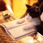 隙間時間を有効活用!読書の効果をより高める方法まとめ