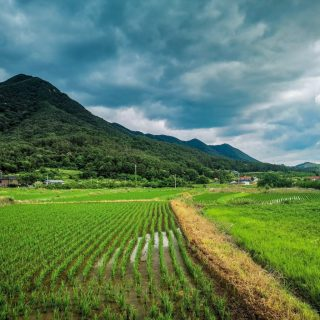 5 Reasons to Live in Korea's Countryside
