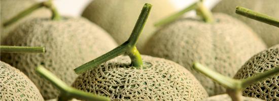 Gokseong Melon