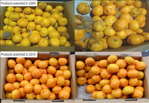 Tangerine-applied-to-Zippys-fresh-pad