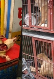 """""""Dog meat consumption is an"""