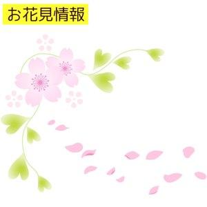 高田公園の桜の2018年の開花状況と満開予想!ライトアップ時間は?