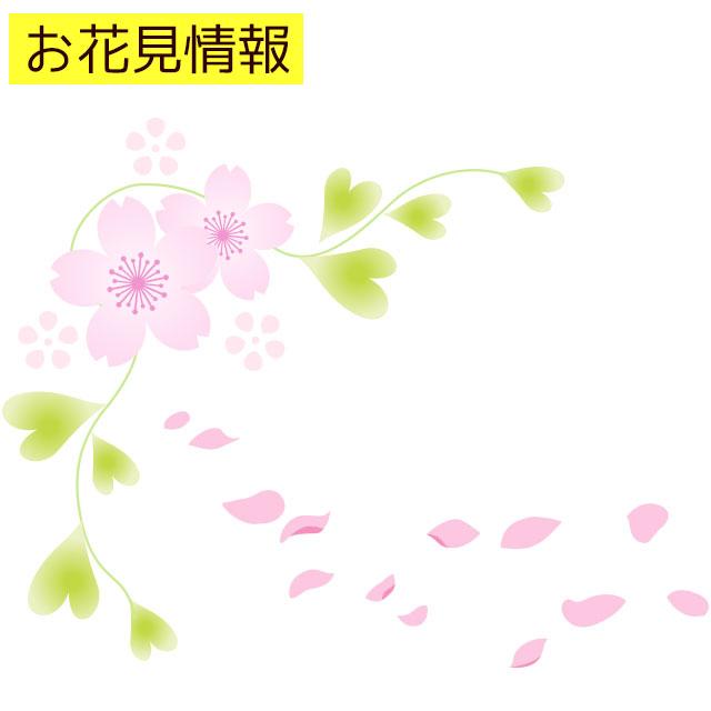 弥彦神社の桜の見頃はいつ?混雑状況やライトアップ時間について