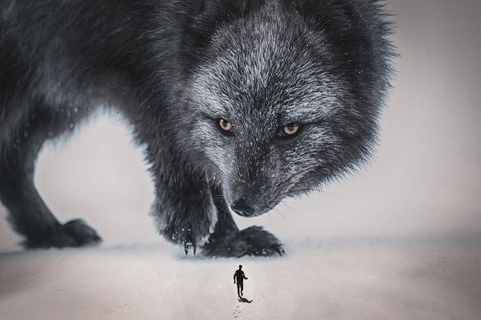 Di no a los coyotes - Miguel Angel Aviles