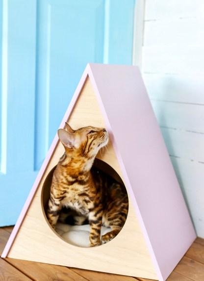 Cat and dog house Rainbow