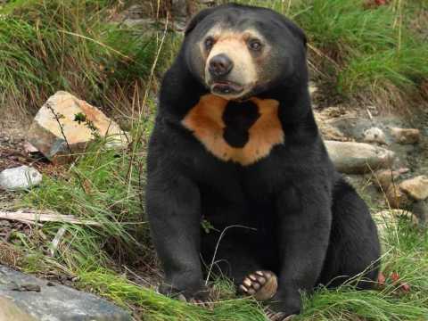 Многообразие медведей.