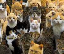 Аосима: Кошки захватили Японский Остров
