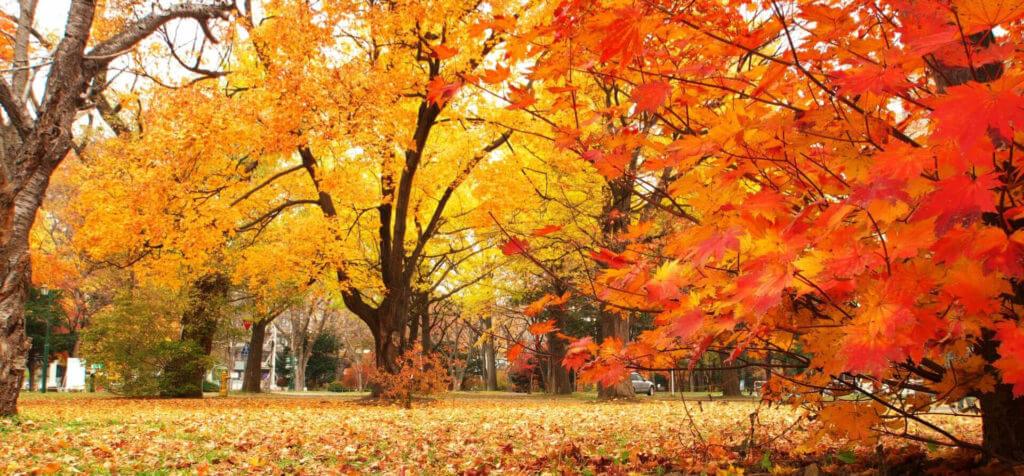 fall01-1-1-1024x476-1