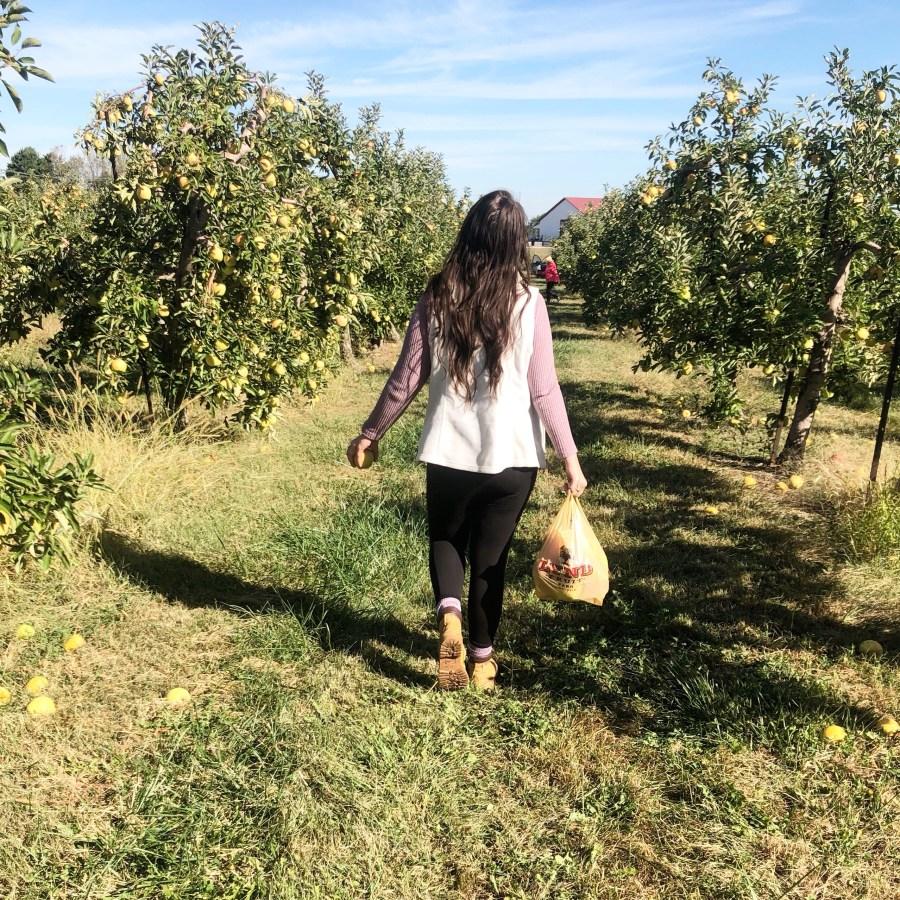 apple picking at Lynd's fruit farm