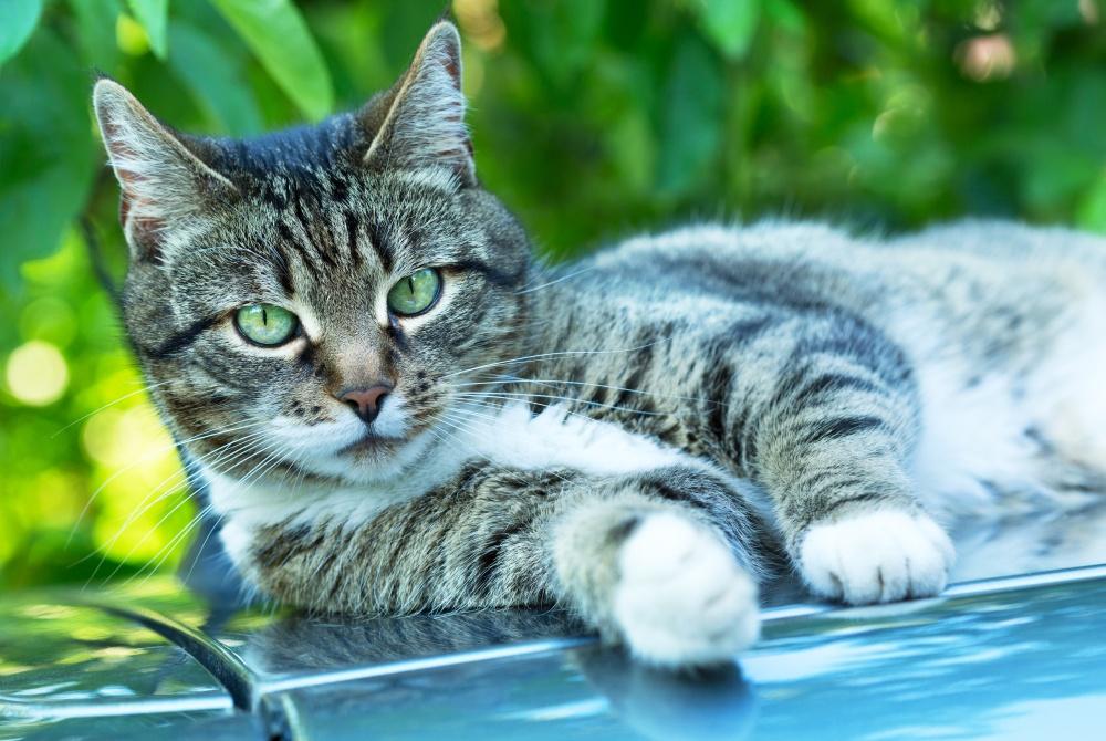 Поставили диагноз пиелонефрит у котов Подозрение на пиелонефрит у котов