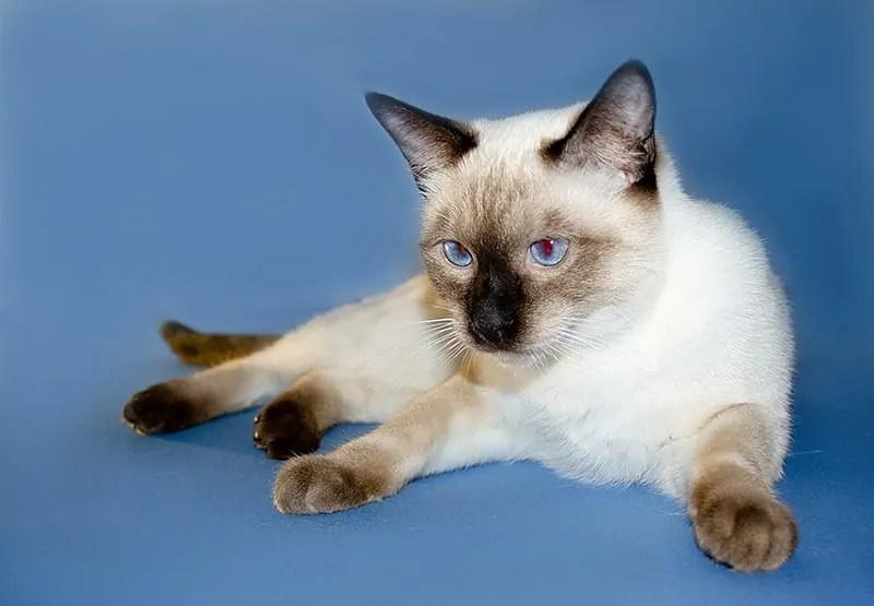 Как отучить кошку от корма и приучить к домашней еде? Как правильно отучить кошку от сухого корма Как отучить кота от сухого корма