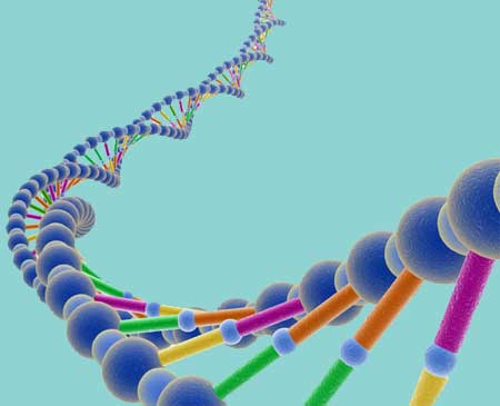 Расшифрована ДНК домашней кошки
