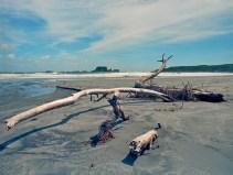 Tauranga Bay, Westport_Kodak Ektar 100
