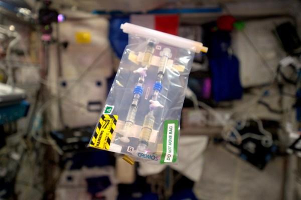 Pozorování katalytické reakce enzymů ve vesmíru pro výukový experiment Cataliss od CNES.