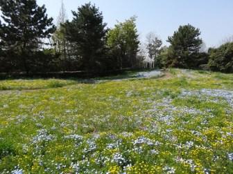 名古屋港ブルーボネットのお花