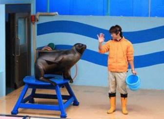 竹島水族館のアシカ