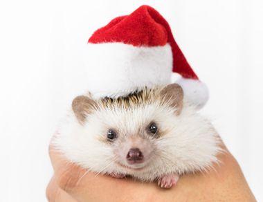 子供のクリスマスプレゼント【小学生女の子】が欲しい物は何?