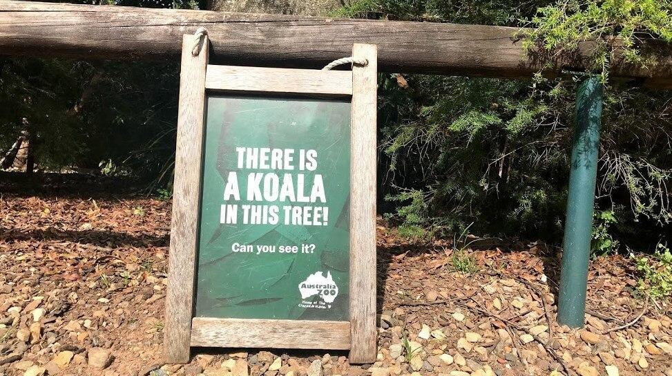 Australia Zoo のコアラがいる木の前に置いてあるサイン