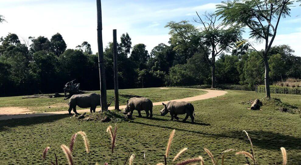 Australia Zoo の『Africa』セクションにいるサイを撮った写真