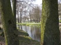 Drzewa w miescie 2017 KOSTROMA (50)