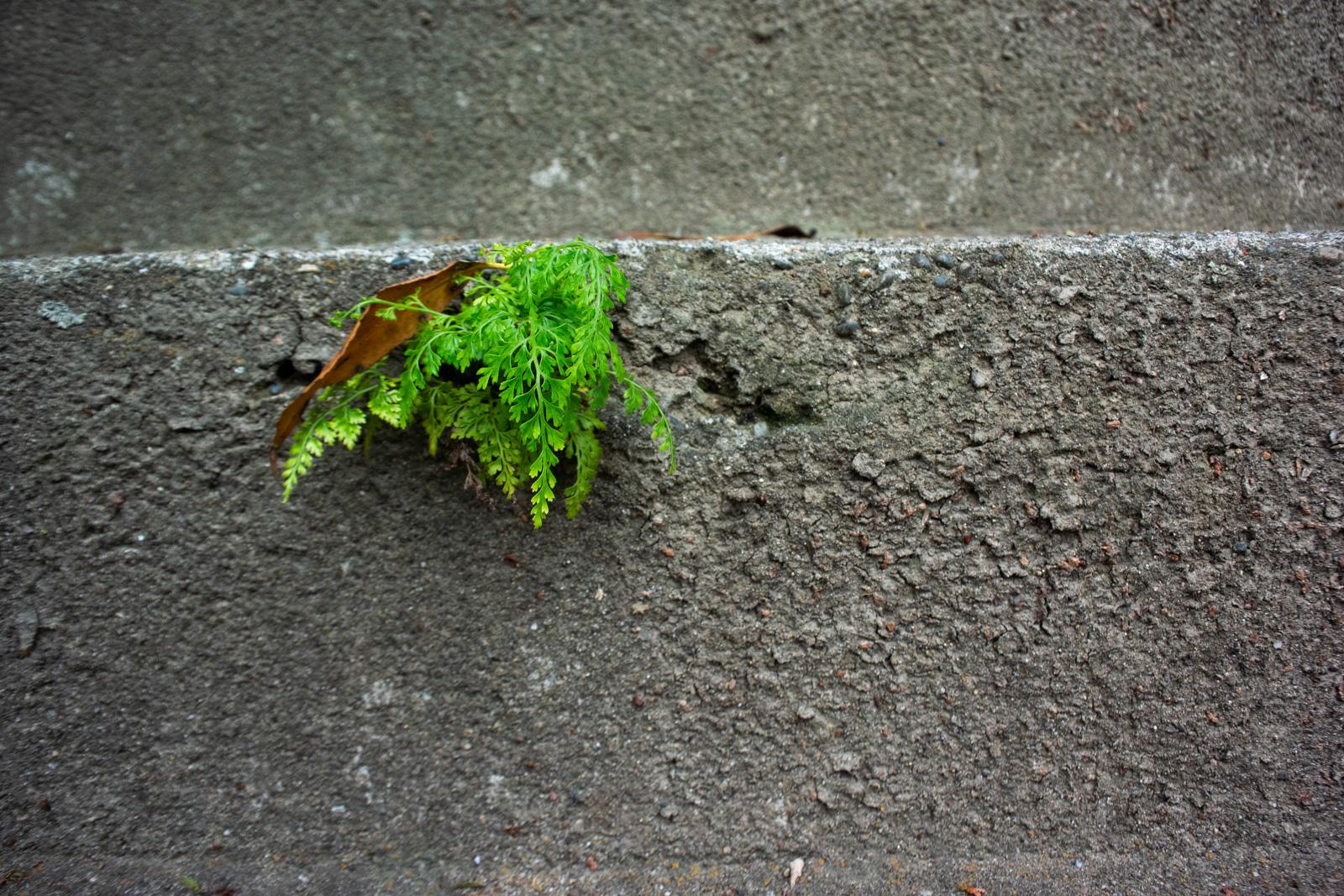 階段から顔を出す草