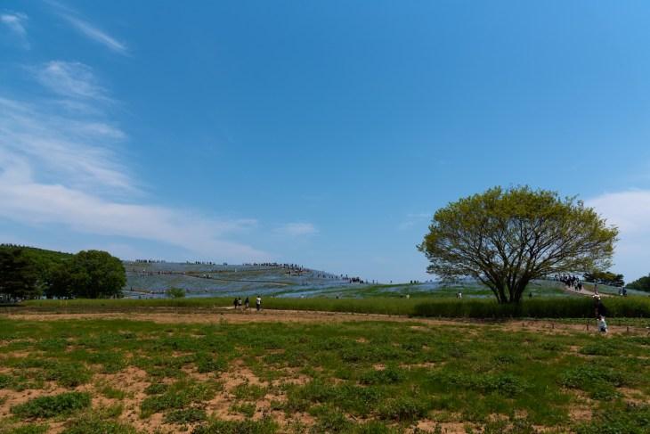 ひたち海浜公園みはらしの丘