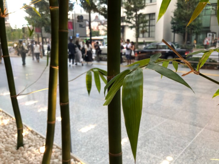 Apple丸の内の竹